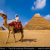 Egypt - Cairo - القاهرة - al-Qāhira - Great Pyramids of Giza - UNESCO World Heritage Site - Famous last remaining monument of the Seven Wonders of the Ancient World