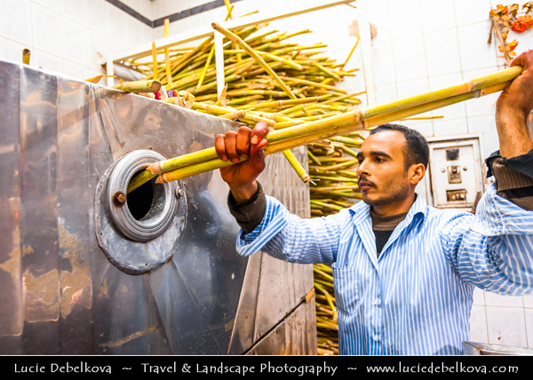 Egypt - Luxor - El Souk - Souq - Tradition open air market with various local and tourist products and souvenirs - Sugar Cane - Traditional agricultural product of Luxor used also for fresh sweet juice - الأقصر - al-Uqṣur