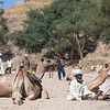 Villagers from outlying districts gathered at the weekly camel market in Keren, Eritrea.