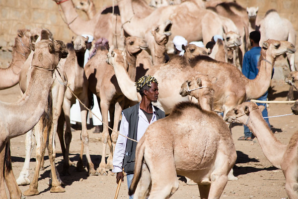 Checking the wares at the weekly camel market in Keren, Eritrea.