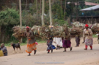 collecting fire wood, north of Addis Ababa