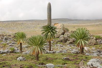 Ethiopia 2007 (Bale Mountains)