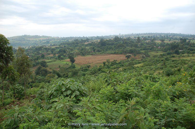 view near Wondo Genet, 2010m