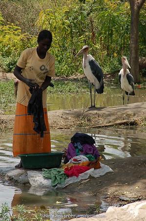 washing & Marabou Stork