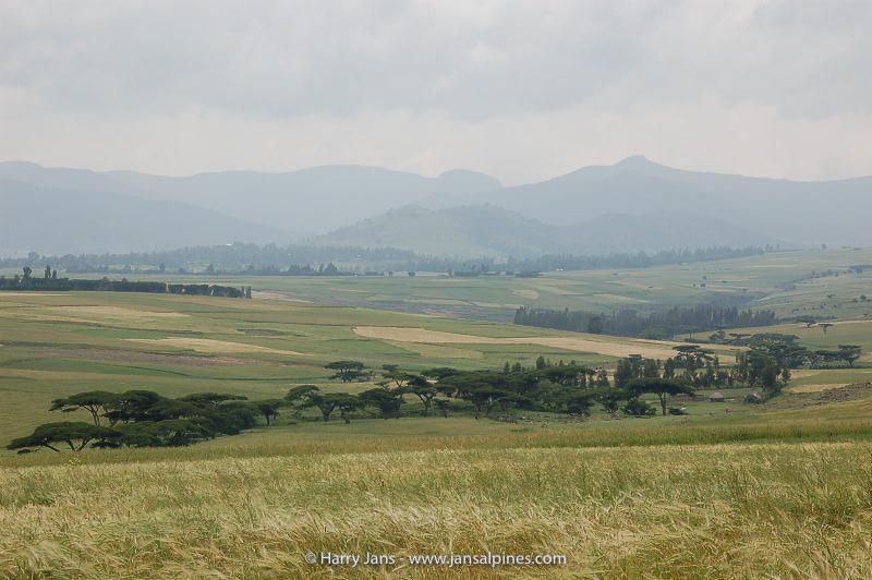Oromiya,  near Dodola, 2495m