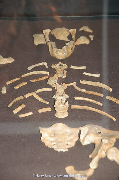 """Lucy"" found in 1974, the oldest hominid ever found"