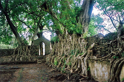 overgrown palace ruins, near gonder, ethiopia