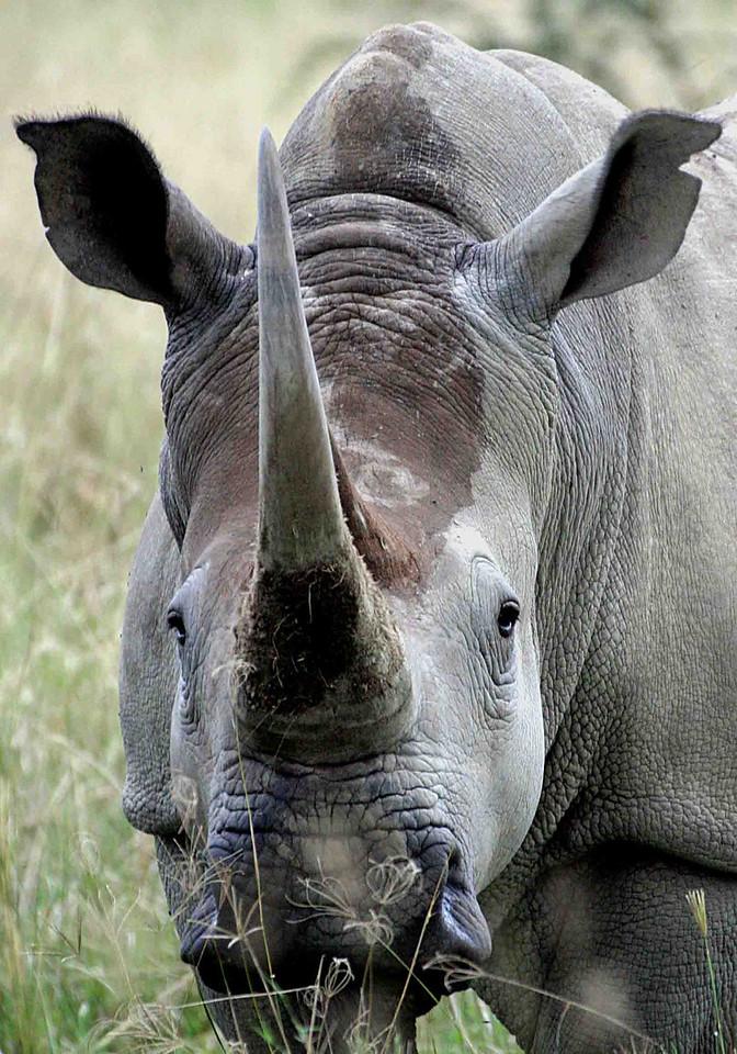 Rhino near Lake Nakuru.