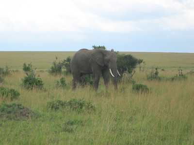 Elephant. The second of our big 5 sightings.