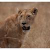 McCrae Kenya 2010 - 2010 - IMG_1114