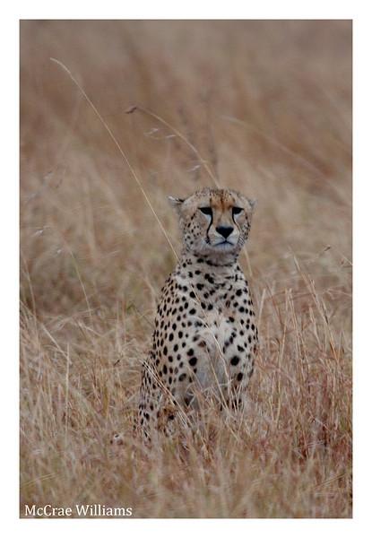 McCrae Kenya 2010 - 2010 - IMG_1135