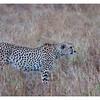 McCrae Kenya 2010 - 2010 - IMG_1176