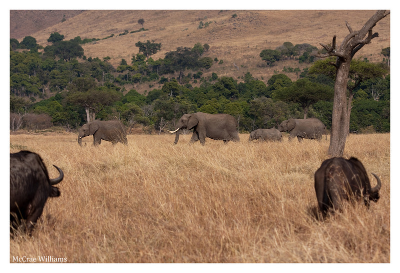 McCrae Kenya 2010 - 2010 - IMG_1227