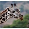 McCrae Kenya 2010 - 2010 - IMG_1120