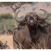 McCrae Kenya 2010 - 2010 - IMG_1220