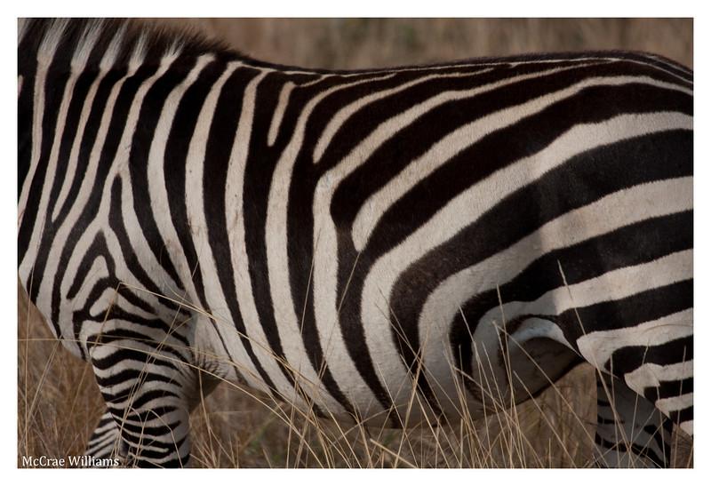 McCrae Kenya 2010 - 2010 - IMG_1215