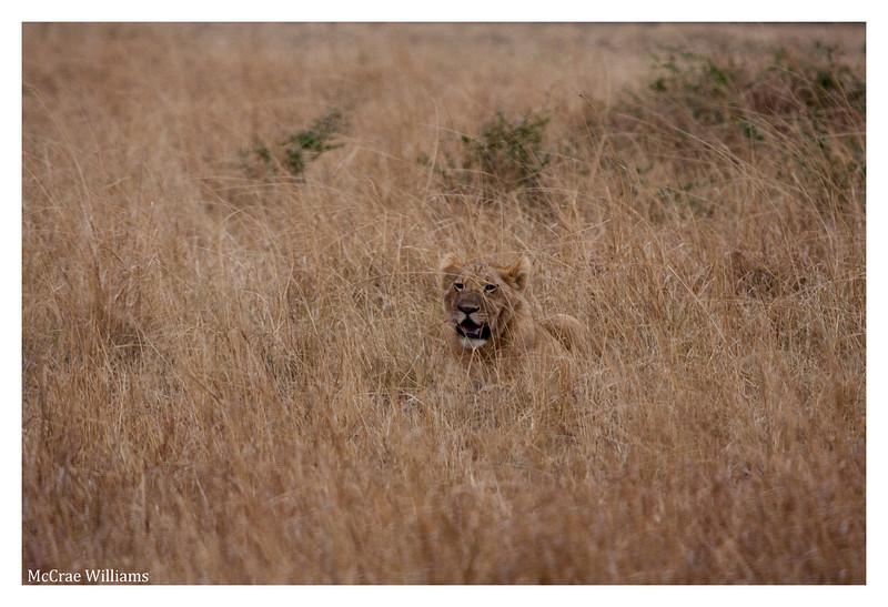 McCrae Kenya 2010 - 2010 - IMG_1075
