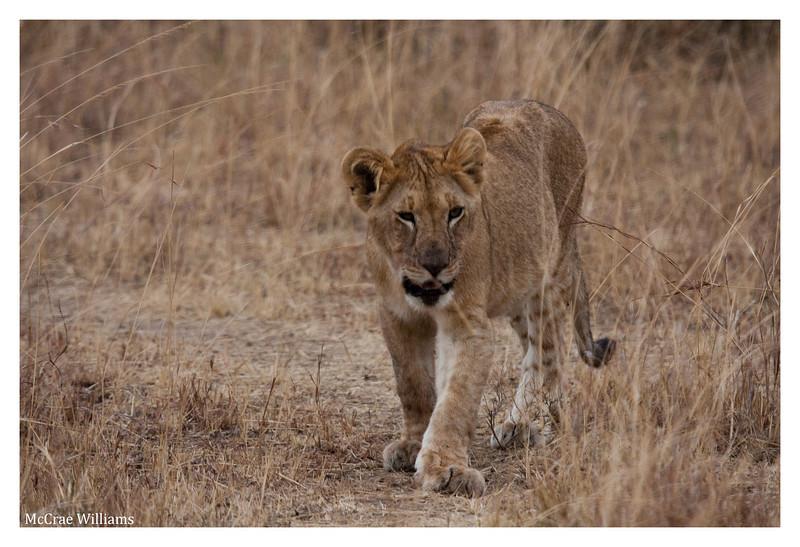 McCrae Kenya 2010 - 2010 - IMG_1079