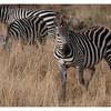 McCrae Kenya 2010 - 2010 - IMG_1213