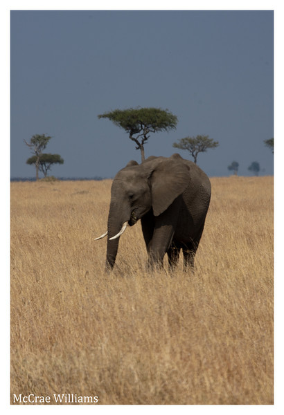 McCrae Kenya 2010 - 2010 - IMG_1244