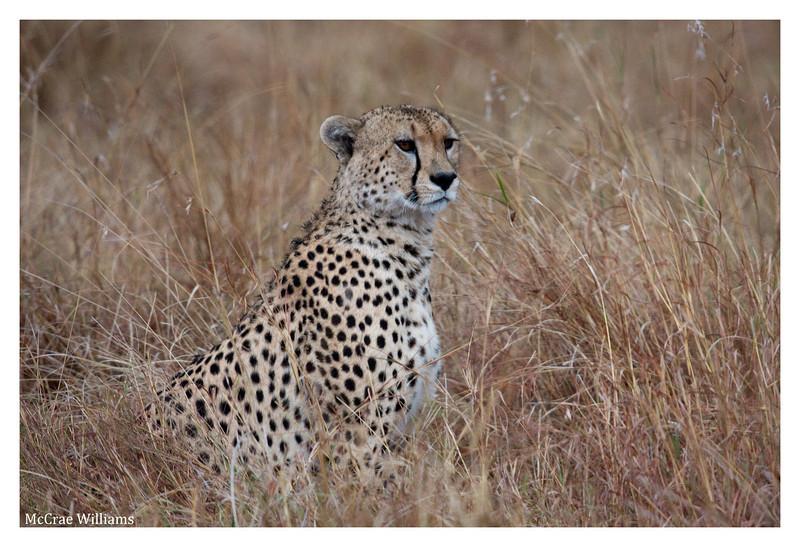 McCrae Kenya 2010 - 2010 - IMG_1164