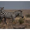McCrae Kenya 2010 - 2010 - IMG_1024