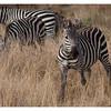 McCrae Kenya 2010 - 2010 - IMG_1214