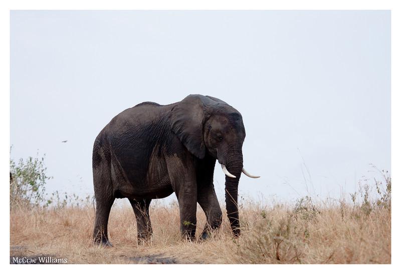 McCrae Kenya 2010 - 2010 - IMG_1123