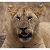 McCrae Kenya 2010 - 2010 - IMG_1106