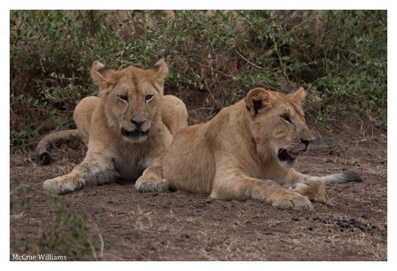 McCrae Kenya 2010 - 2010 - IMG_1092