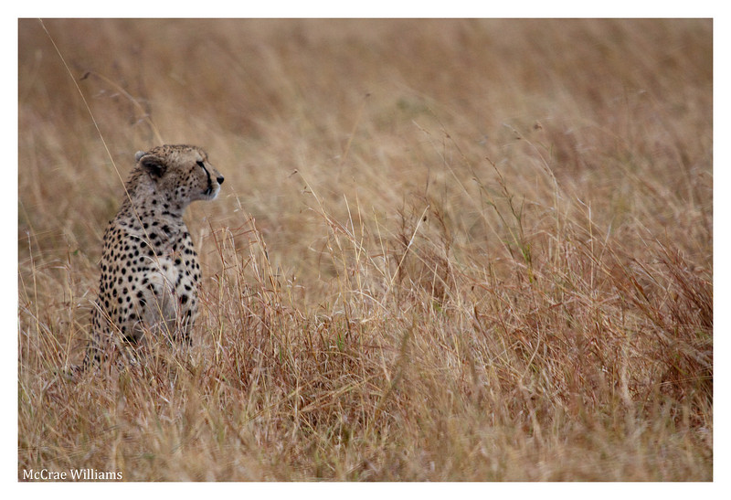 McCrae Kenya 2010 - 2010 - IMG_1141