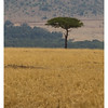 Kenya 2010 - 2010 - KENY70601