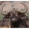 McCrae Kenya 2010 - 2010 - IMG_1219