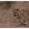 McCrae Kenya 2010 - 2010 - IMG_1078
