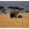 McCrae Kenya 2010 - 2010 - IMG_1235