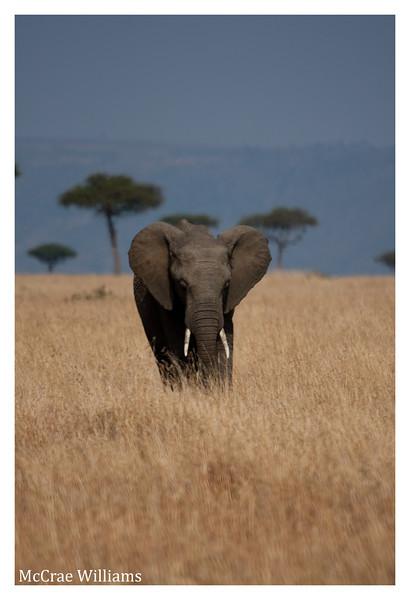 McCrae Kenya 2010 - 2010 - IMG_1255