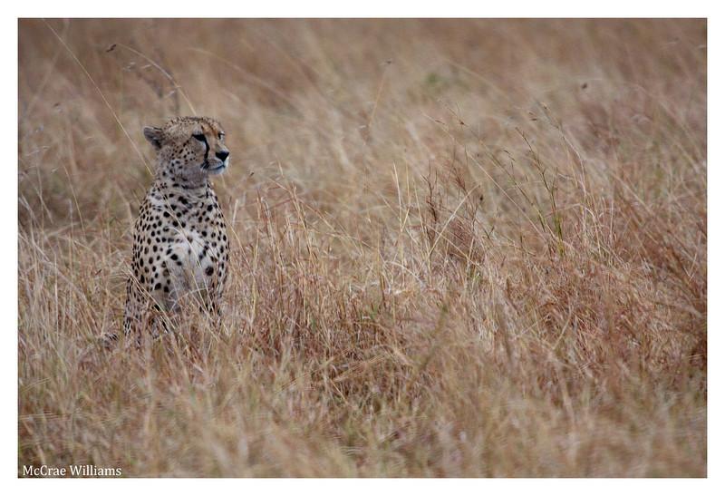McCrae Kenya 2010 - 2010 - IMG_1140