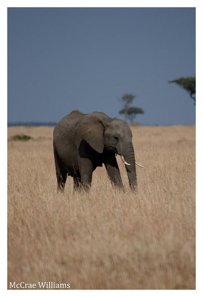 McCrae Kenya 2010 - 2010 - IMG_1246