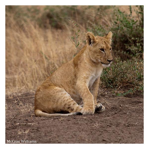 McCrae Kenya 2010 - 2010 - IMG_1084