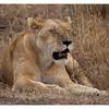 McCrae Kenya 2010 - 2010 - IMG_1090
