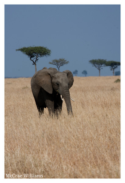 McCrae Kenya 2010 - 2010 - IMG_1243