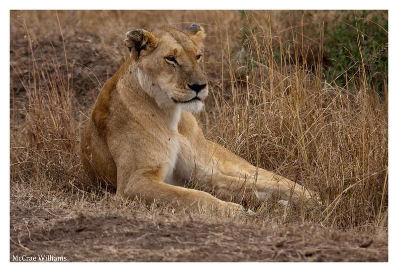 McCrae Kenya 2010 - 2010 - IMG_1094