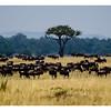Kenya 2010 - 2010 - KENY70641
