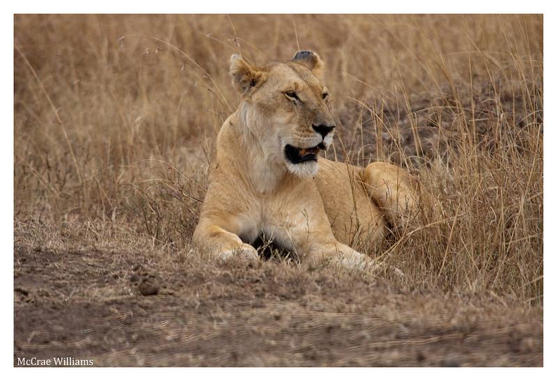 McCrae Kenya 2010 - 2010 - IMG_1086
