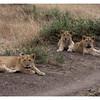 McCrae Kenya 2010 - 2010 - IMG_1099