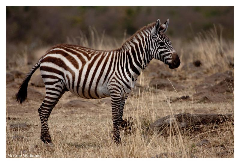 McCrae Kenya 2010 - 2010 - IMG_1042