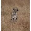 McCrae Kenya 2010 - 2010 - IMG_1137