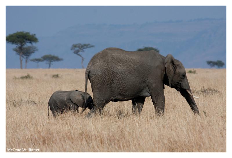 McCrae Kenya 2010 - 2010 - IMG_1248