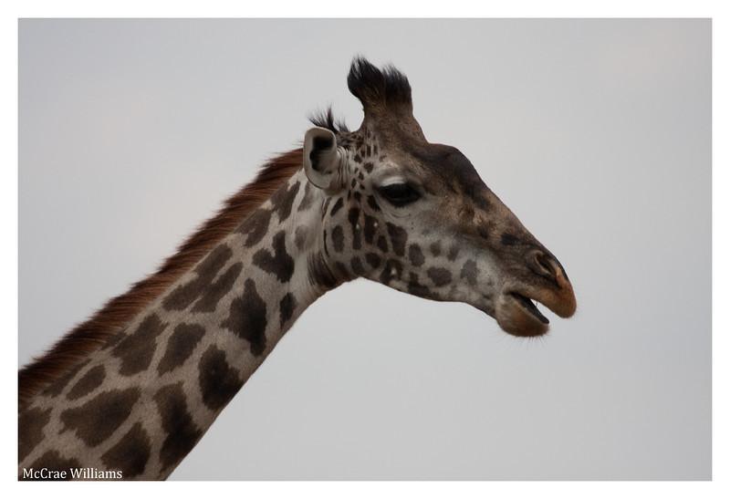 McCrae Kenya 2010 - 2010 - IMG_1064
