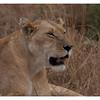 McCrae Kenya 2010 - 2010 - IMG_1097